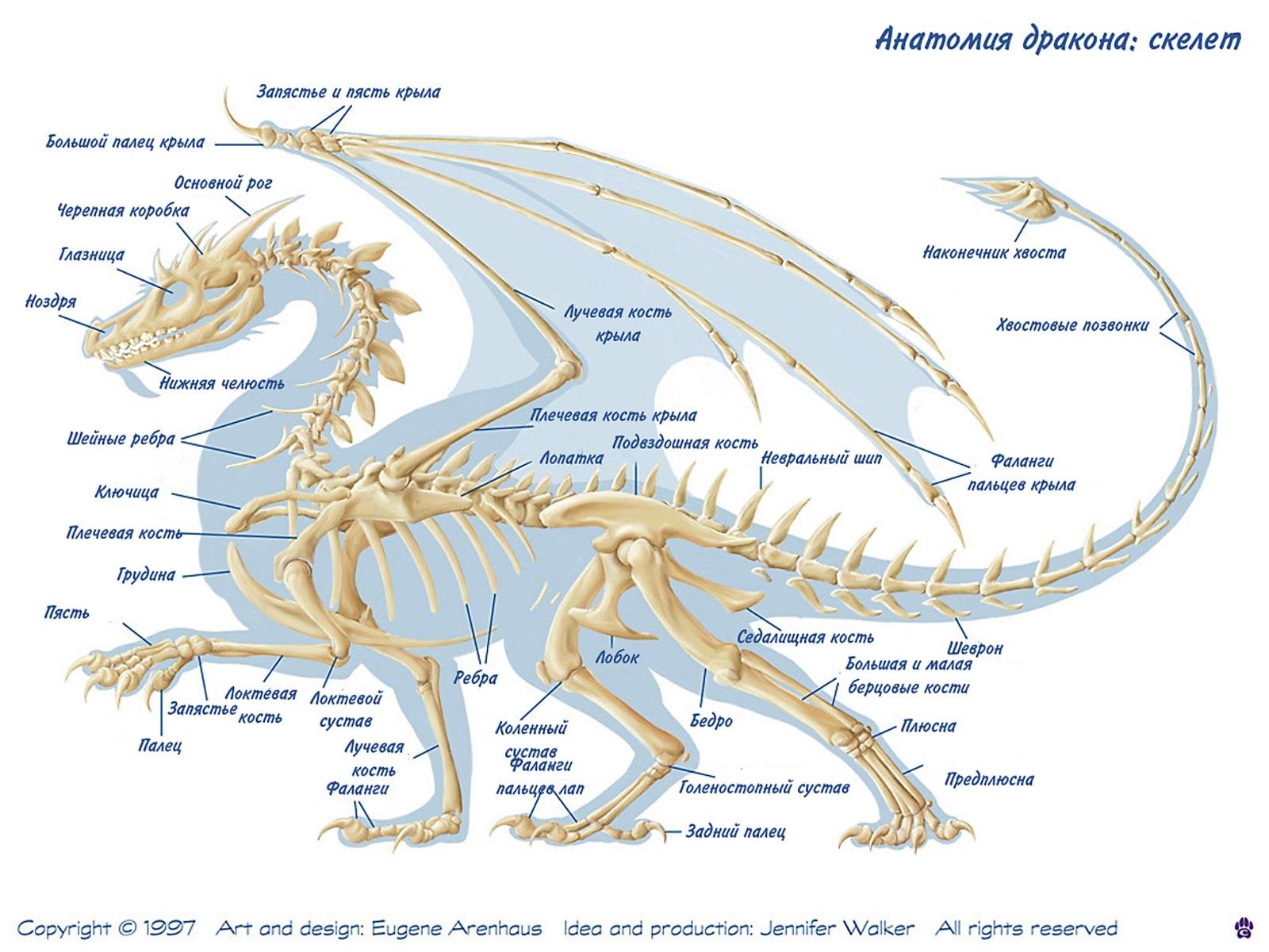 http://dragons-nest.ru/dragons/rasa_drakonov/img/024.jpg