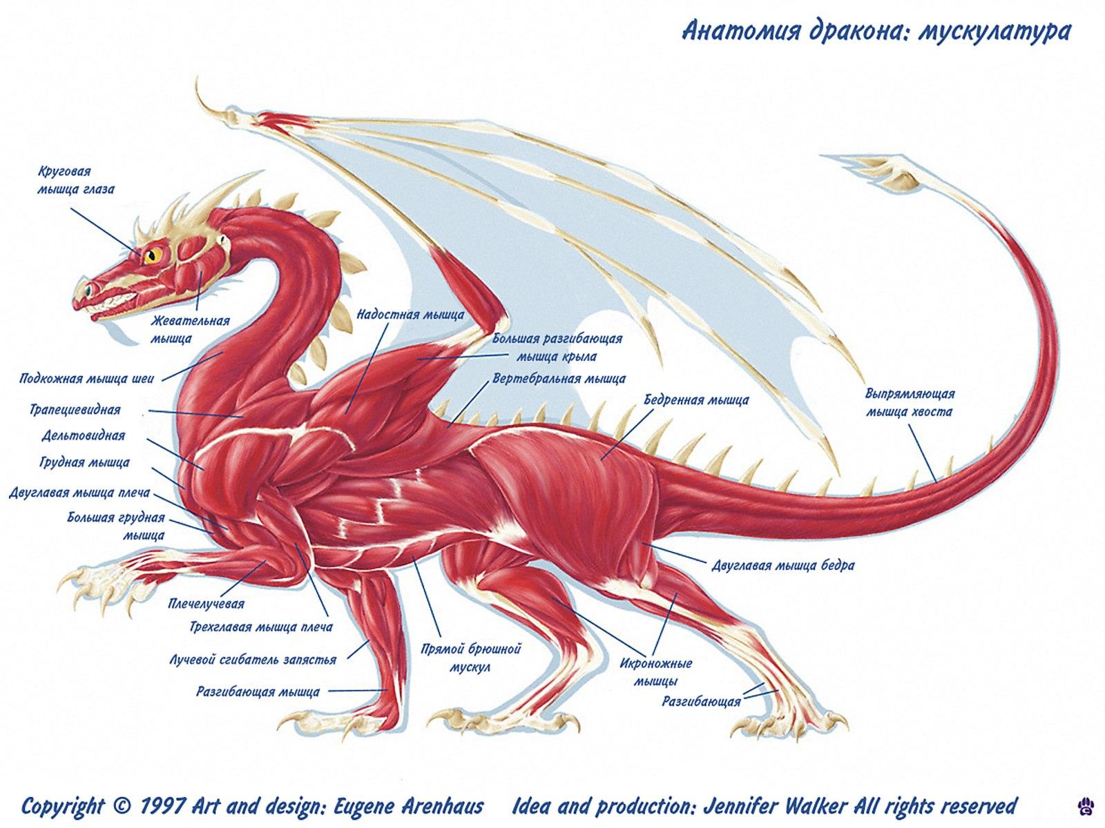 http://dragons-nest.ru/dragons/rasa_drakonov/img/025.jpg